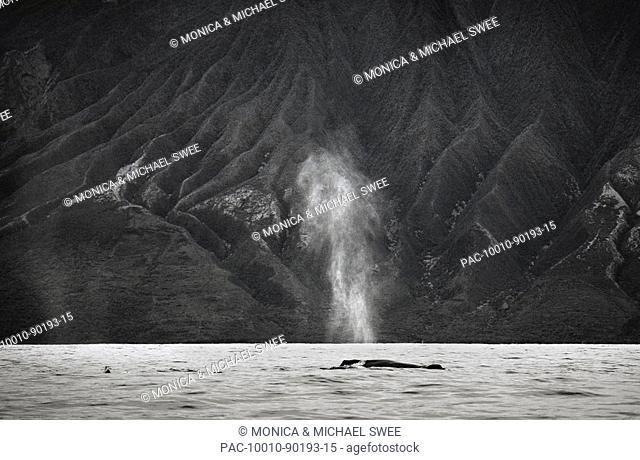 Hawaii, Maui, The spout of a humpback whale