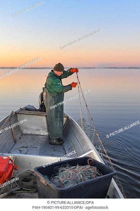 01 April 2019, Brandenburg, Groß Schauen: Laszlo Acz, fisherman of the fishery Köllnitz, controls a gillnet in the water of the Groß Schauener Seenkette