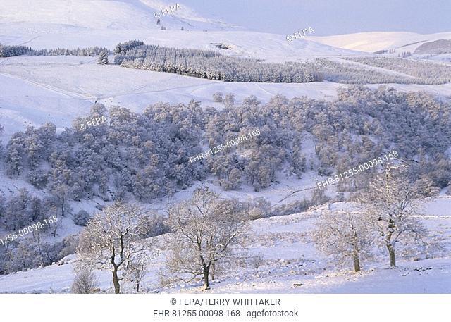 Scotland - Snow scene, Glen Prosen, Angus