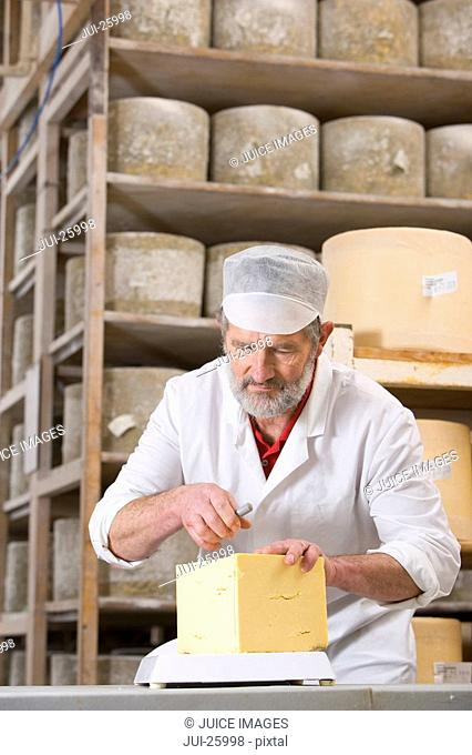Cheese maker cutting farmhouse cheddar with cheese wire in cellar