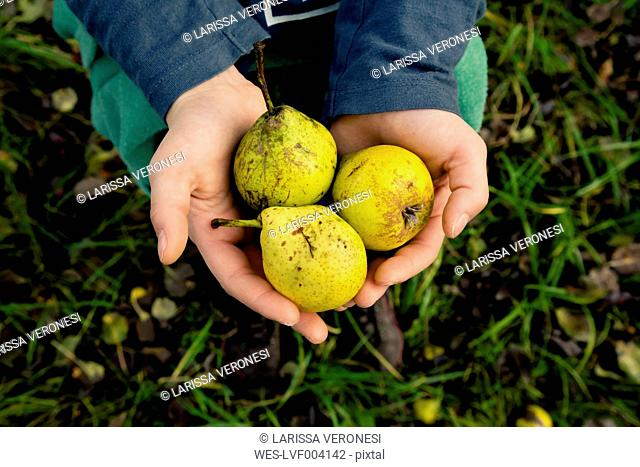 Girl's hands holding three pears