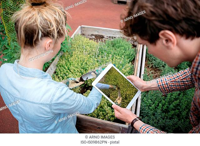 Man using digital tablet to photograph woman gardening