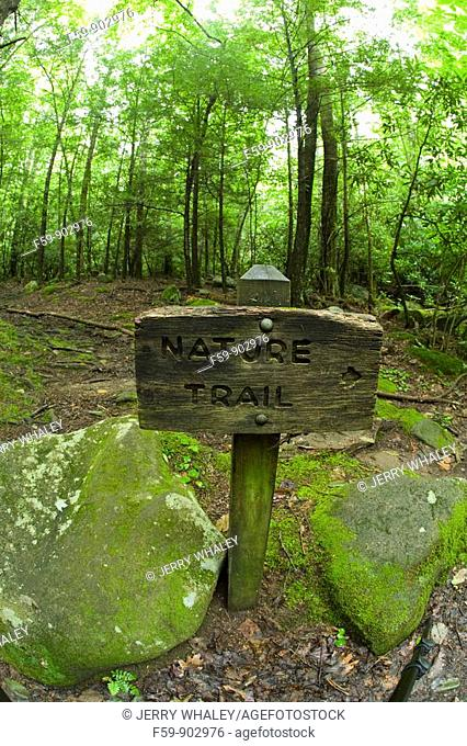 Nature Trail Scenics, Great Smoky Mtns Nat  Park, TN