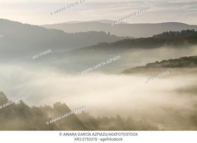 Mist in Irati forest, Navarre, Spain