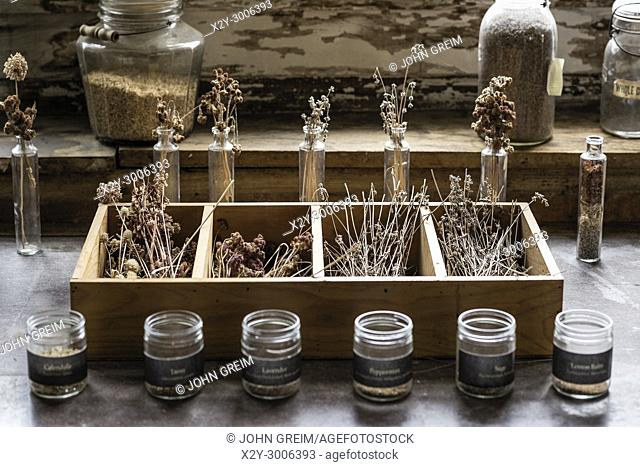 Dried herb and flowers, Canterbury Shaker Village, New Hampshire, USA