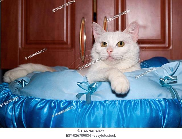 White cat lying on blue silk cushion on cabinet