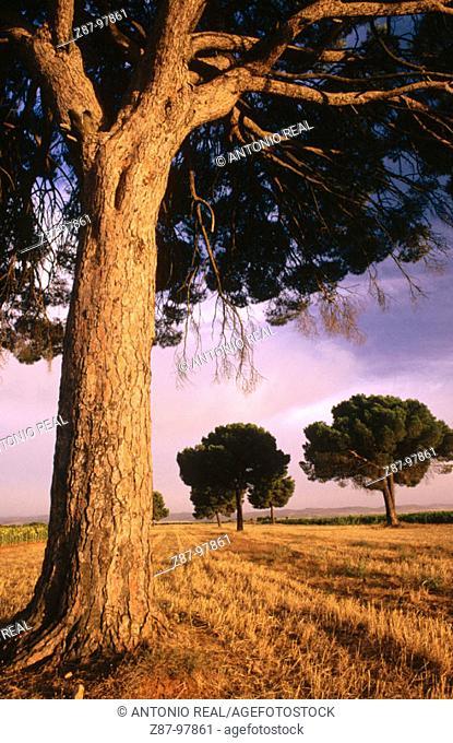 Casas de Ves, Albacete province, Spain