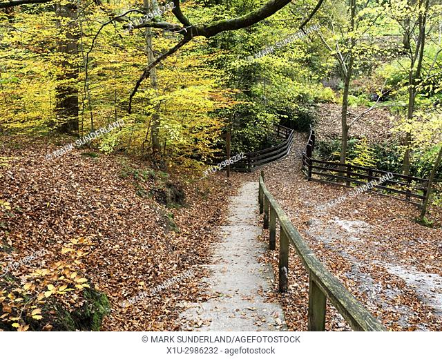 Autumn Colours in Goitsock Wood at Hallas Bridge near Cullingworth West Yorkshire England