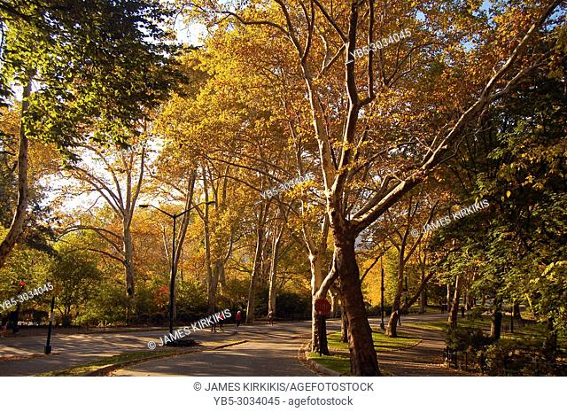 Sunlight filters into a fall scene in New York's Central Park