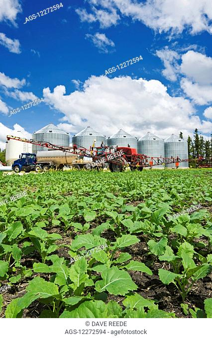 Early growth canola with farmer loading high clearance spraying equipment with herbicide, near Dugald; Manitoba, Canada