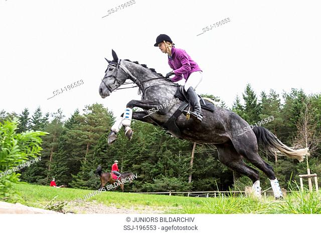 Trakehner Horse. Rider on gray mare negotiating an obstacle. Germany