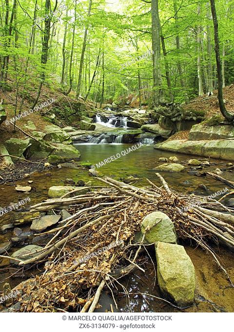 Gualba stream and Beech forest (Fagus sylvatica), below Santa Fe dam. Montseny Natural Park. Barcelona province, Catalonia, Spain