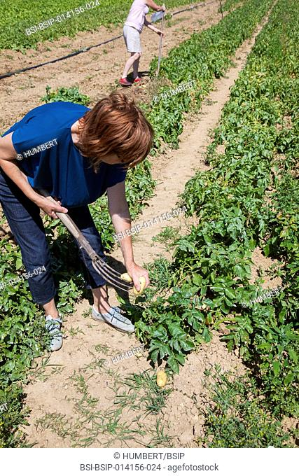 Pick-your-own fruit and vegetable farm