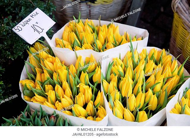 Tulips, Bloemenmark Flower Market, Singel Canal, Amsterdam, Holland