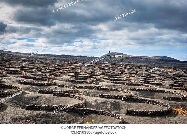 Vineyards of volcanic island of Lanzarote, Canary Islands, Spain, Europe
