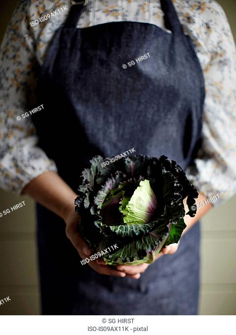 Cropped view of woman wearing apron holding cabbage
