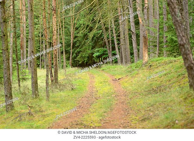 Landscape of a little way in a mixed forest in summer