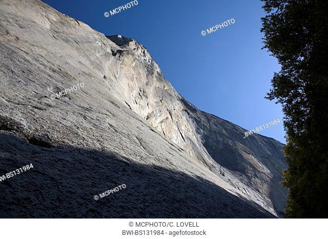 Looking up from the base of EL CAPITAN in YOSEMITE VALLEY, USA, California, Yosemite National Park