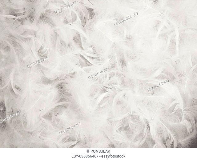 Chicken feather background
