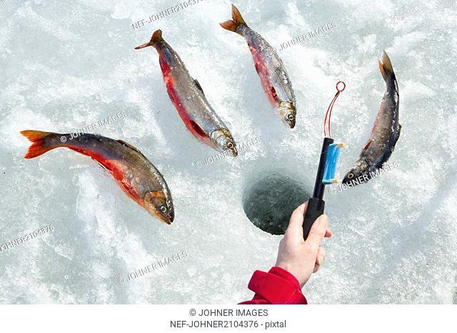 Fish near hole in ice
