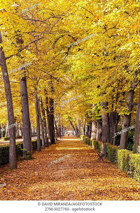 Jardín del Príncipe. Aranjuez. Madrid province, Spain