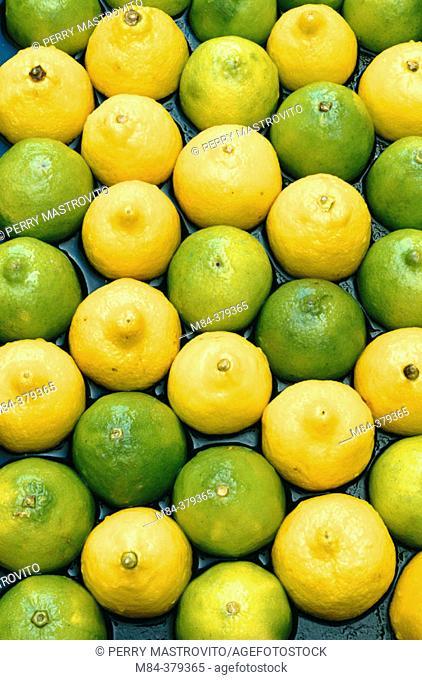 Lemon and lime fruit halves on wet black asphalt