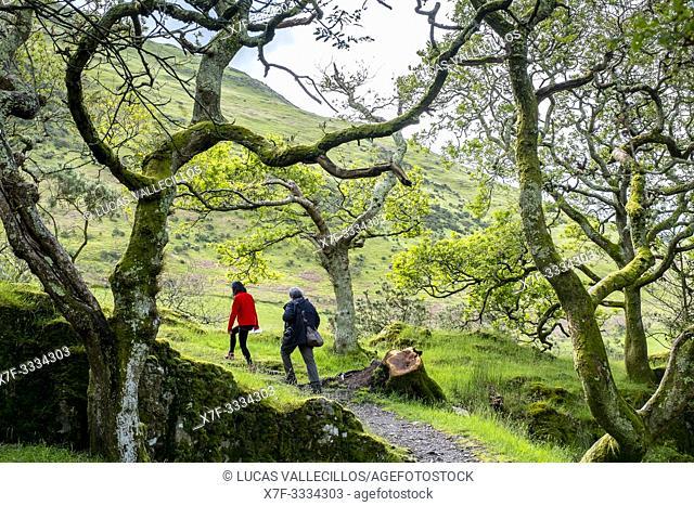 Way to Castell y Bere, Dysynni Valley, Gwynedd, Wales