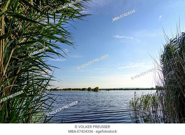 Illmitz, Lake Neusiedl (Neusiedler See), reet, birds, national park Neusiedler See-Seewinkel, Burgenland, Austria
