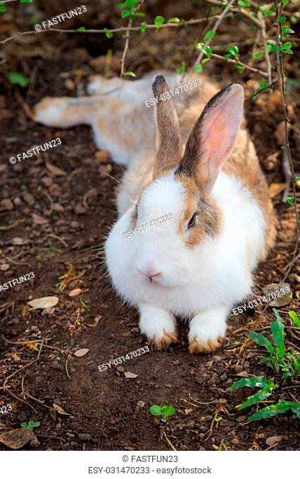 Close up of Wild rabbit in the nature background