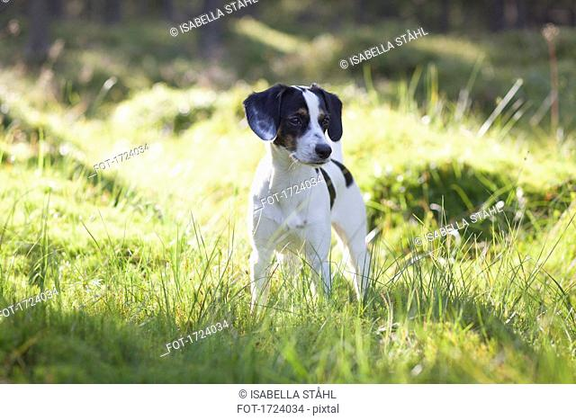 Dog standing in grassy field during sunny day