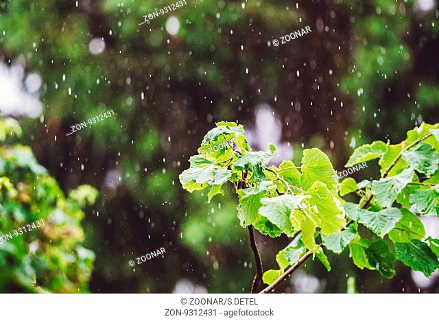 forest plants under the sweet rain natural backgrounds