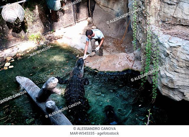 alligatori del mississippi, parco oltremare di riccione