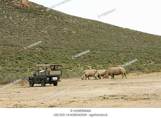 Aquila Private Game Reserve, Western Cape, South Africa, Africa