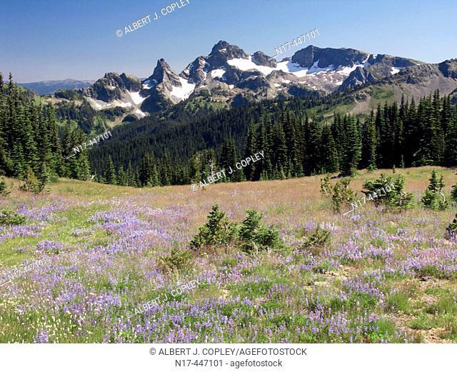 Flowers on slope of Mt Rainier