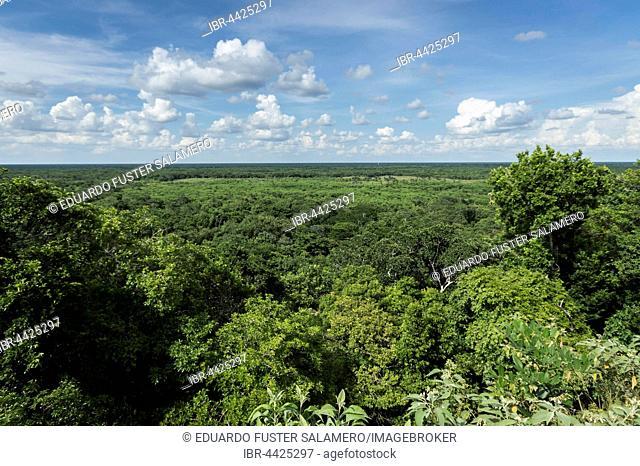 View of jungle from the top of Ek Balam, ancient Mayan ruin, Yucatan, Mexico
