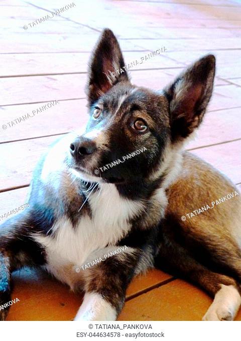 Lovely dog on a wooden floor