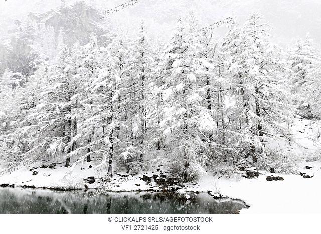 Chisone valley, Piedmont, Italy. snowfall in the chisone valley