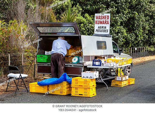 A Man Sells Kumara (Sweet Potatoes) By The Side Of The Road, Waipu, Northland, New Zealand