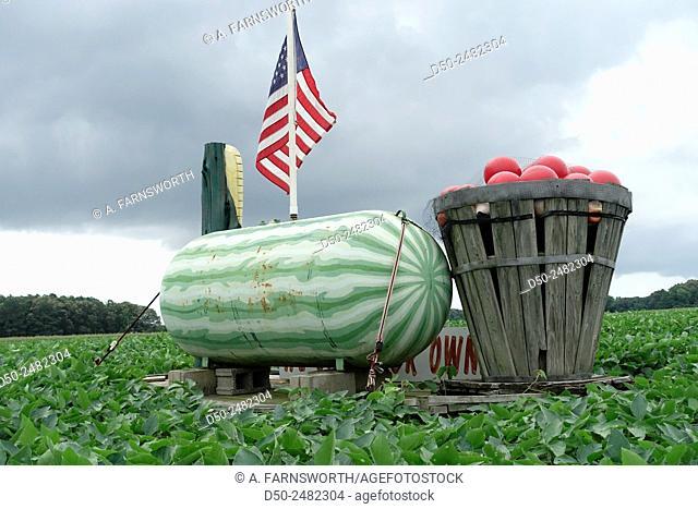 Farm, municipal airport, storage, hotel, and residential area, Salisbury, Maryland, USA