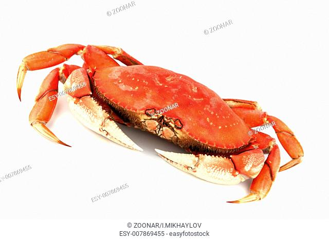 dungeness crab dungeness crab