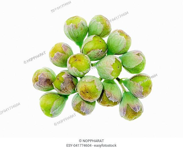 Close up seeds of Vitex trifolia plant on white background