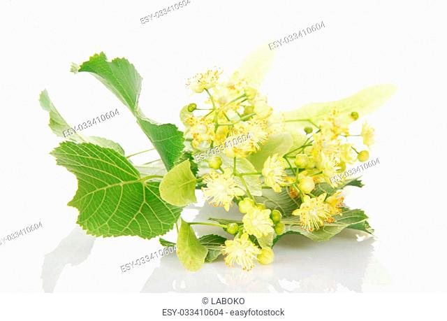 A foliage and flowers of linden isolated on a white