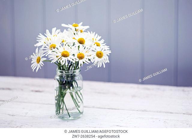 Daisy Leucanthemum vulgare in glass vase