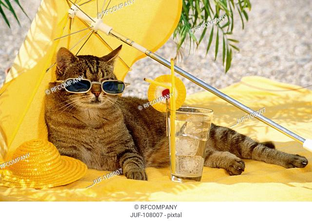 tabby cat - with sun glasses under sun shade