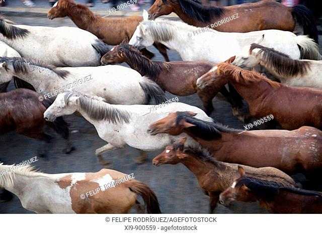 Herd of horses, 'Saca de las yeguas' festival, town of Almonte, province of Huelva, Andalusia, Spain. Dating back to 1504, every 26th of June