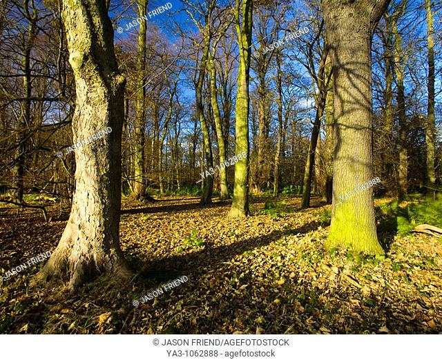 England, Tyne & Wear, Newcastle Upon Tyne  Woodland forming part of the Gosforth Park Nature Reserve, a private reserve managed by the Natural History Society...