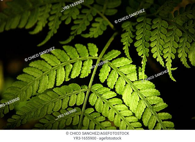 Ferns grow in El Triunfo Biosphere Reserve in the Sierra Madre mountains, Chiapas state, Mexico