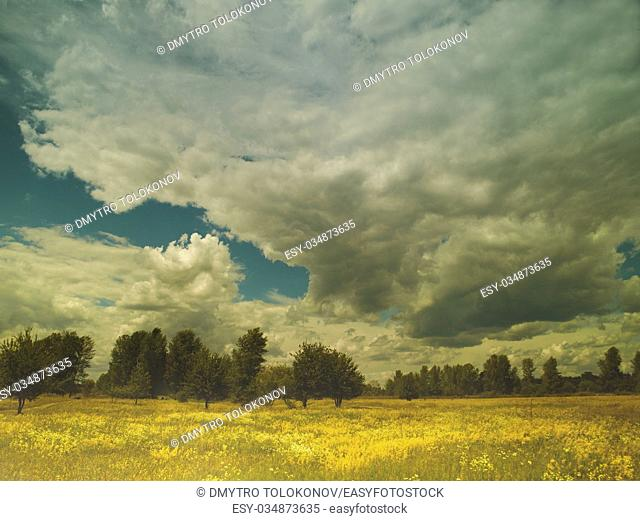 Summer landscape with wild flowers and lush foliage on the meadow