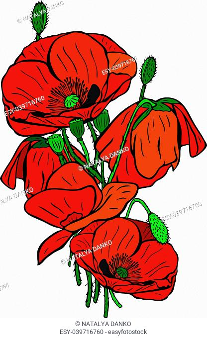 hand-drawn bouquet of blooming red poppies with green stems and boxes isolated on white background
