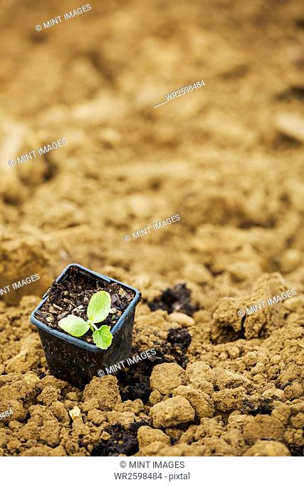 A seedling in a plant pot on top of soil